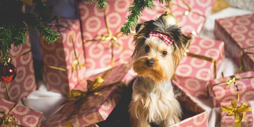 Maltrato animal envuelto en papel de regalo